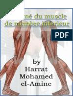 résumé-de-muscle
