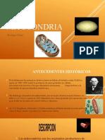 La mitocondrias diapositivas