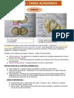 cerebelo 1.pdf