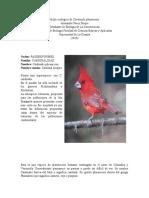 Nicho ecológico de Cardinalis phoeniceus