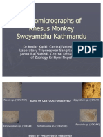 Photomicrographs of Rhesus Monkey Swoyambhu Kathmandu