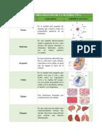 Biologia-Act2_Jocelyn_Taracena_3GM
