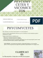 Phycomycetes