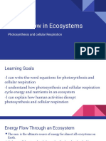 Energy Flow in Ecosystems.pptx