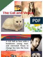 CAT & VENUS