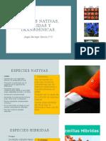 Especies nativas, hibridas y transgénicas