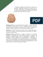 Lóbulos del hemisferio cerebral