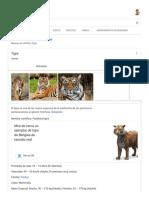 ltigre - Buscar con Google