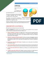 HUESO FRONTAL PRUEBA 2