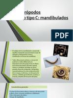 artropodosiimandibulados-131109004359-phpapp02