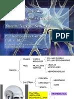 6 - Neurofisiologia - Sentidos Gerais e Especiais - Sistema Nervoso Sensorial