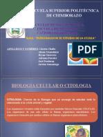 INTRODUCCIÓN AL ESTUDIO DE LA CÉLULA (3).pptx