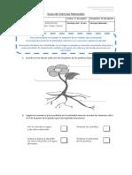 Guía de Ciencias Naturales agosto