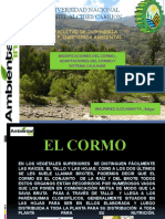 MODIFICACIONES DEL CORMO CLASE 17