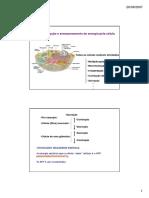 Introdução ao metabolismo e bioenergética