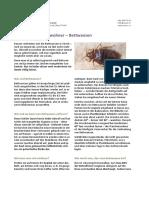 5_Bettwanzen_September 17.pdf