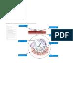 Estructura y función del músculo esquelético report