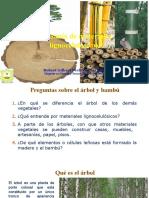 01 Diferencia entre árbol y bambú.pptx
