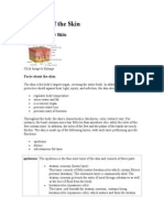 Anatomy of the Skin dianne