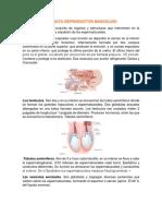 aparato reproductores masculino y femenino.pdf