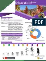 ficha-tecnica-10-cultivo-quinua