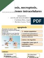 Exposicion 1 Apoptosis,necroptosis y acumulaciones intracelulares