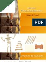 B1T5 - Lesiones óseas y cartilagenosas-2.pdf