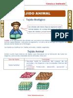 Tejido-Animal-para-Quinto-Grado-de-Primaria 2 periodo