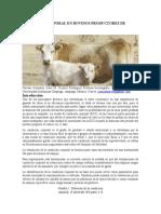Condición Corporal en Bovinos Productores de Carne