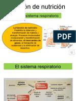 Funcion_de_nutricion-_sistema_respiratorio1