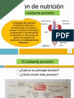 Clase_16._Funcion_de_Nutricion-_sistema_excretor2
