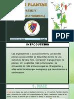 REINO PLANTAE IV ORGANOGRAFIA VEGETAL.pdf