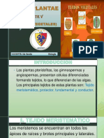 REINO PLANTAE V(TEJIDOS VEGETALES).pdf