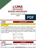 Ácidos Nucleicos 11