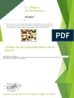 Origen-y-Reconocimiento-de-los-insectos-pptx.docx
