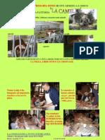 """Fattoria """"LA CAMELIA"""", lavoro classi seconde a.s. 2009/2010"""