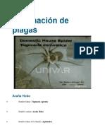 Araña Hobo.docx