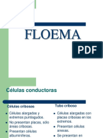 Floema-2-apuntes.pdf