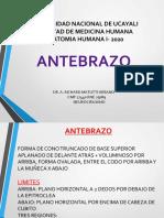 Anatomia Reg Antebraquial UNU2020