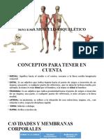 tutoria 2, sistema musculoesqueletico.pptx