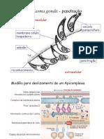 Toxoplasmose_02