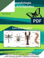 artropodos-160409051500.pdf