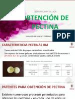 patentes pectina.pptx