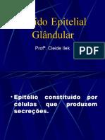 2.2 - Epitelio glândular