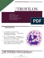 Neutrofilos (1)