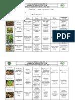Tarea 18-21. Plantas Alimenticias
