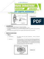 El-Tejido-Cartilaginoso-para-Tercero-de-Secundaria.doc