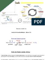 aula ciclo de kebrs e fosforilação (1)