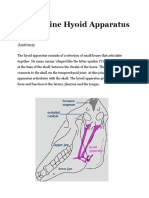 The Equine Hyoid.docx