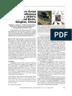 New Avian Influenza Virus (H5N1) in Wild Birds, Qinghai, China